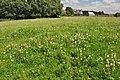 Field of clover - Llanmaes - geograph.org.uk - 1410901.jpg