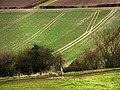 Field under Small Down - geograph.org.uk - 698943.jpg