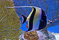 Fish 3 (6246928121).jpg