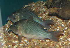 Fish at Louisville Zoo 2.jpg