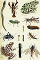 Fisherman's lures and game-fish food - with colored pictures from life of various creatures fish eat and new improved artificial imitation floating nature lures and chart-plans to show the haunts (14785803143).jpg