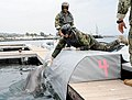 Flickr - Official U.S. Navy Imagery - A dolphin is coaxed onto a transport mat..jpg