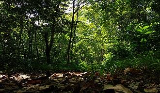 Siliguri - Sukna forest-Siliguri