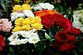Flores do Arouche (5600394103).jpg