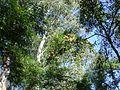 Flores no alto de galhos 2.jpg