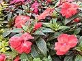 Flores y otras plantas Btá abr 2018 - 12.jpg