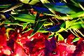 Flower lights (8240054527).jpg