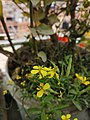 Flowers74.jpg