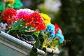 Flowers (2184028736).jpg