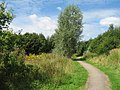 Footpath, Clincton Wood Local Nature Reserve - geograph.org.uk - 930347.jpg
