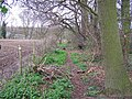 Footpath in Church Wood, Stockbury - geograph.org.uk - 733401.jpg