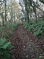 Footpath through Limeslake Wood - geograph.org.uk - 619572.jpg