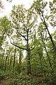 Forêt Départementale de Méridon à Chevreuse le 29 septembre 2017 - 27.jpg
