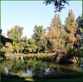 Ford Park, Upper Pond Reflections, Redlands, CA 7-12 (7699756204).jpg