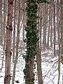 Forest Park Prešov 18 Slovakia4.jpg