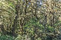 Forest in Fiordland National Park.jpg