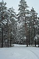Forest near Ob river in Altai Region 20.JPG