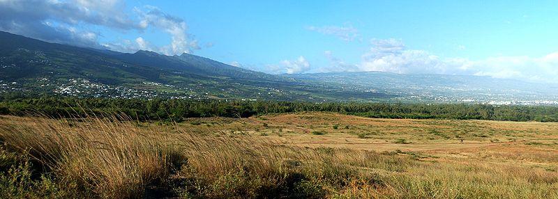 Que faire à l'île de la Réunion: explorer la forêt de l'Etang-Salé.