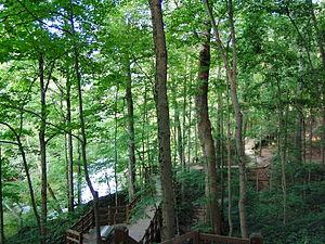 Fort Harrison State Park - Fall Creek Boardwalk