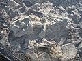 Fossil tetrapod.jpg