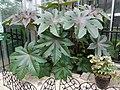 Frightful Flora - US Botanic Gardens 10.jpg