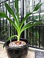 Frightful Flora - US Botanic Gardens 15.jpg