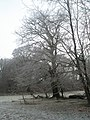Frosty trees at The Sling - geograph.org.uk - 1119904.jpg