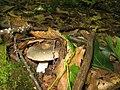 Fungi 032.jpg