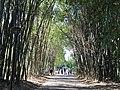Garden paths at City Botanic Gardens, Brisbane.jpg
