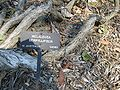 Gardenology.org-IMG 0673 hunt07mar.jpg