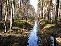 Garkalnes novads, Latvia - panoramio (19).jpg