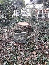 Gedenkstein für einen von König Albert gepflanzten Baum in Kamenz (Quelle: Wikimedia)