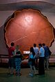 Giant Sequoia at the American Museum of Natural History.jpg
