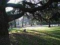 Giardini pubblici reggio emilia cane.jpg