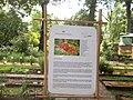 Giardino botanico di Brera (Milan 13.jpg