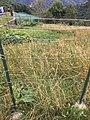 Giardino di Erbonne.jpg