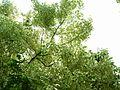 Giardino di Ninfa 22.jpg