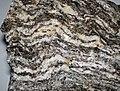 Gneiss (Joshimath Formation, Proterozoic; outcrop at Joshimath, Uttarakhand State, Indian Himalayas) 3 (26708323062).jpg