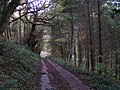 Going through the woods near Southcoombe - geograph.org.uk - 1584430.jpg