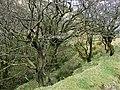 Gorge by trackway by Blaen Rhisglog Plantation, Carmarthenshire - geograph.org.uk - 1227392.jpg