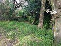 Grass in Nishi Park.JPG