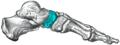 Gray290 - Navicular bone.png