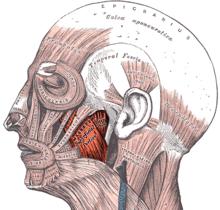 tics et problemes de tension musculaire