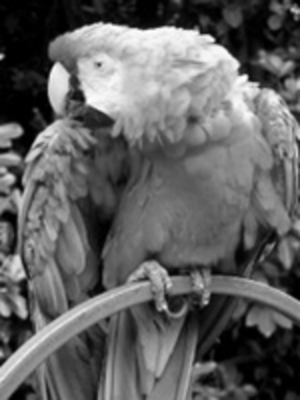 Grayscale - A sample grayscale image