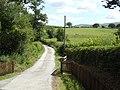 Green Grove - geograph.org.uk - 520959.jpg