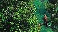 Greeny Bird 3.jpg