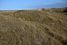 sand dunes with coarse grass
