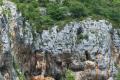 Grottes et nid de vautour fauve dans les Gorges du Tarn.png
