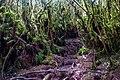 Gunung Irau (The Mossy Forest) (26119232711).jpg