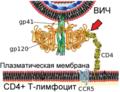 HIV Membrane fusion panel rus 1.png